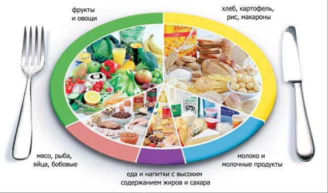 Здоровое питание: модель «тарелки здоровья»-Управление Роспотребнадзора по  Кировской области